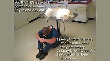Keep Companion Animals Alive